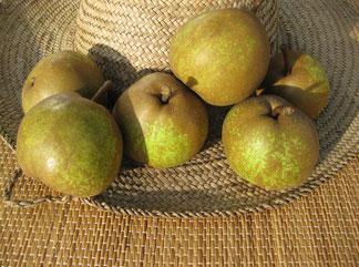 груша оливье де серр фото