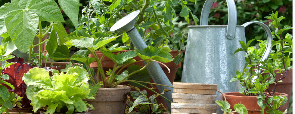 Was braucht man an Gartengeräten - eine Zusammenstellung der besten Gartengeräte hat der Golden Rabbit - hier eine Gießkanne mit Tontöpfen