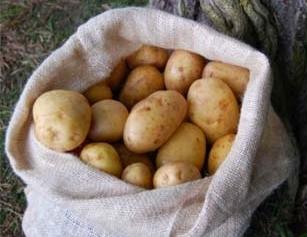 Die schöne Ernte in noch schöneren Jutesäcken lagern