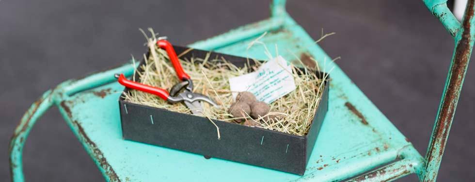Seedballs, Saatgut und Scheren gibt es bei www.the-golden-Rabbit.de