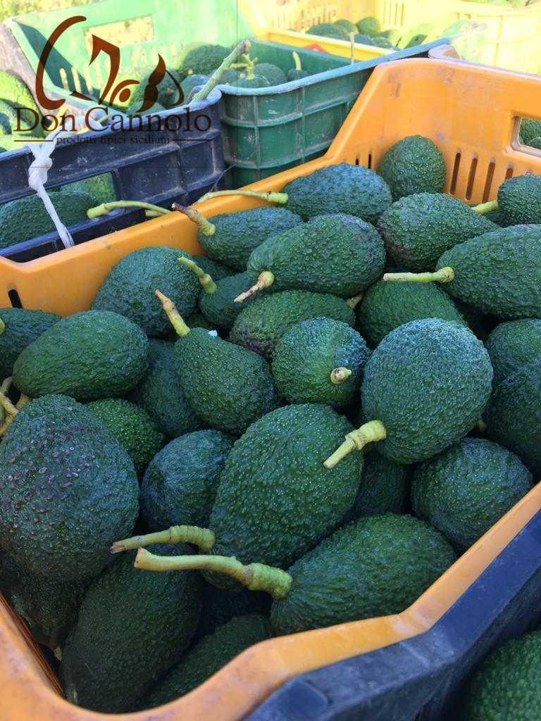 vendita-online-avocado-di-sicilia-trapani