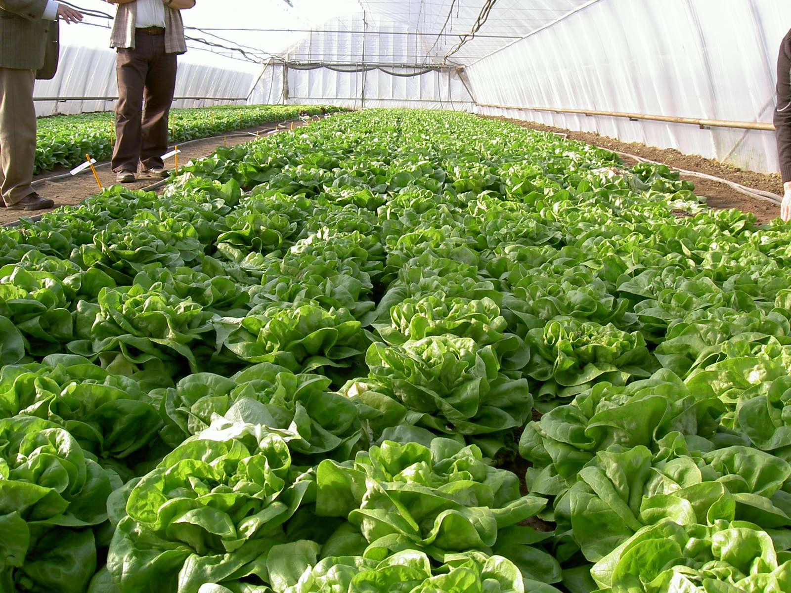 KE-plant wird über das Bewässerungssystem dosiert.