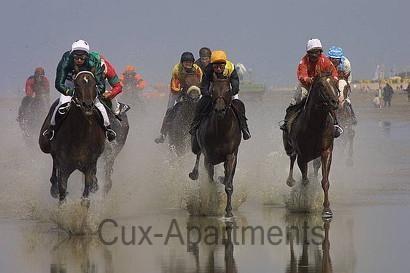 Pferderennen im Watt