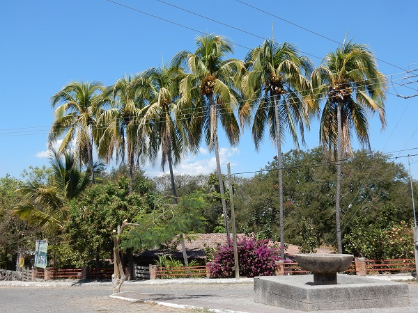 Der ganzen Küste entlang hat es Palmen, wie wurden von den Philippinen eingeführt.
