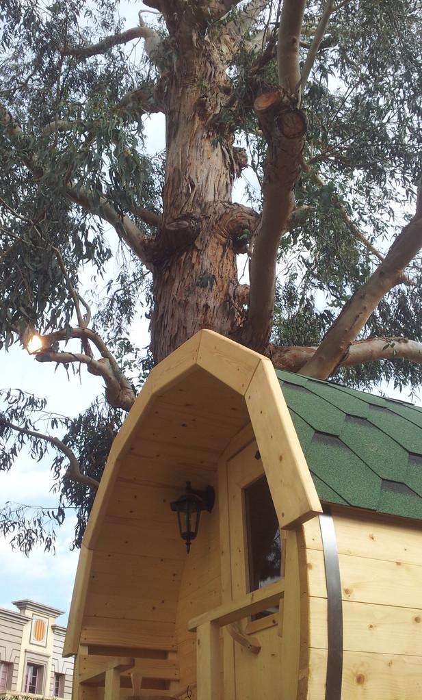 El eucalipto centenario, como anillo al dedo