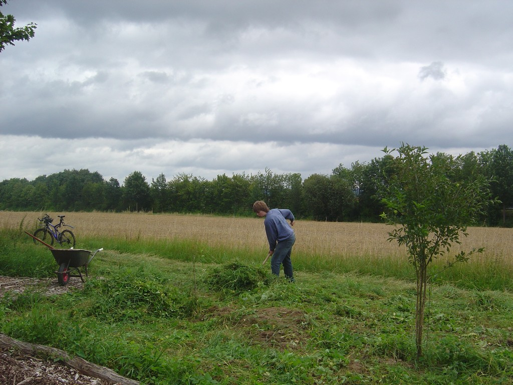 Auf nährstoffarmen Böden gibt es eine größere Artenvielfalt.