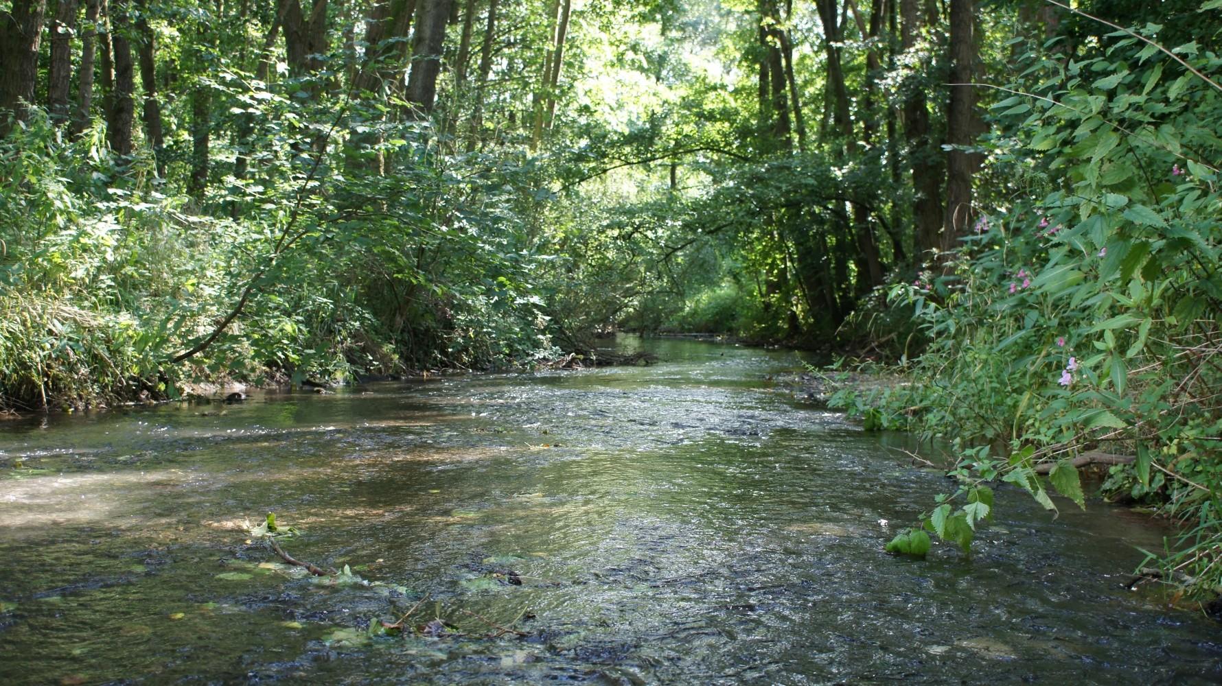 Naturnahe, schnellfließende Abschnitte der Gewässer sind Lebensraum der Wasseramsel / Foto: D.Singer