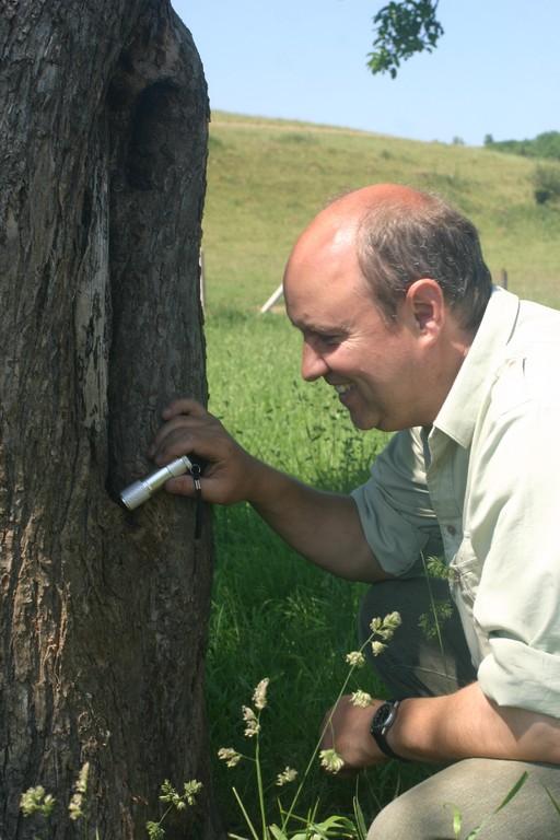 Kontrolle einer Naturhöhle in einem Obstbaum - möglicher Brutplatz des Steinkauzes