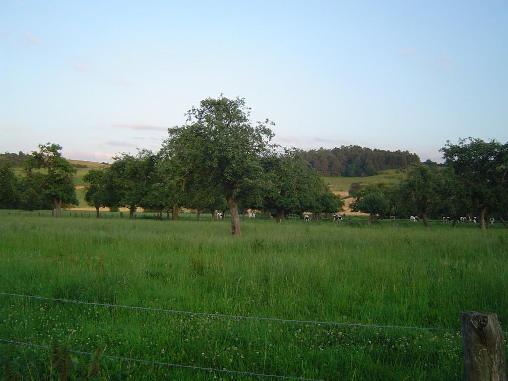 beweidete Streuobstwiese - optimaler Lebensraum für den Steinkauz