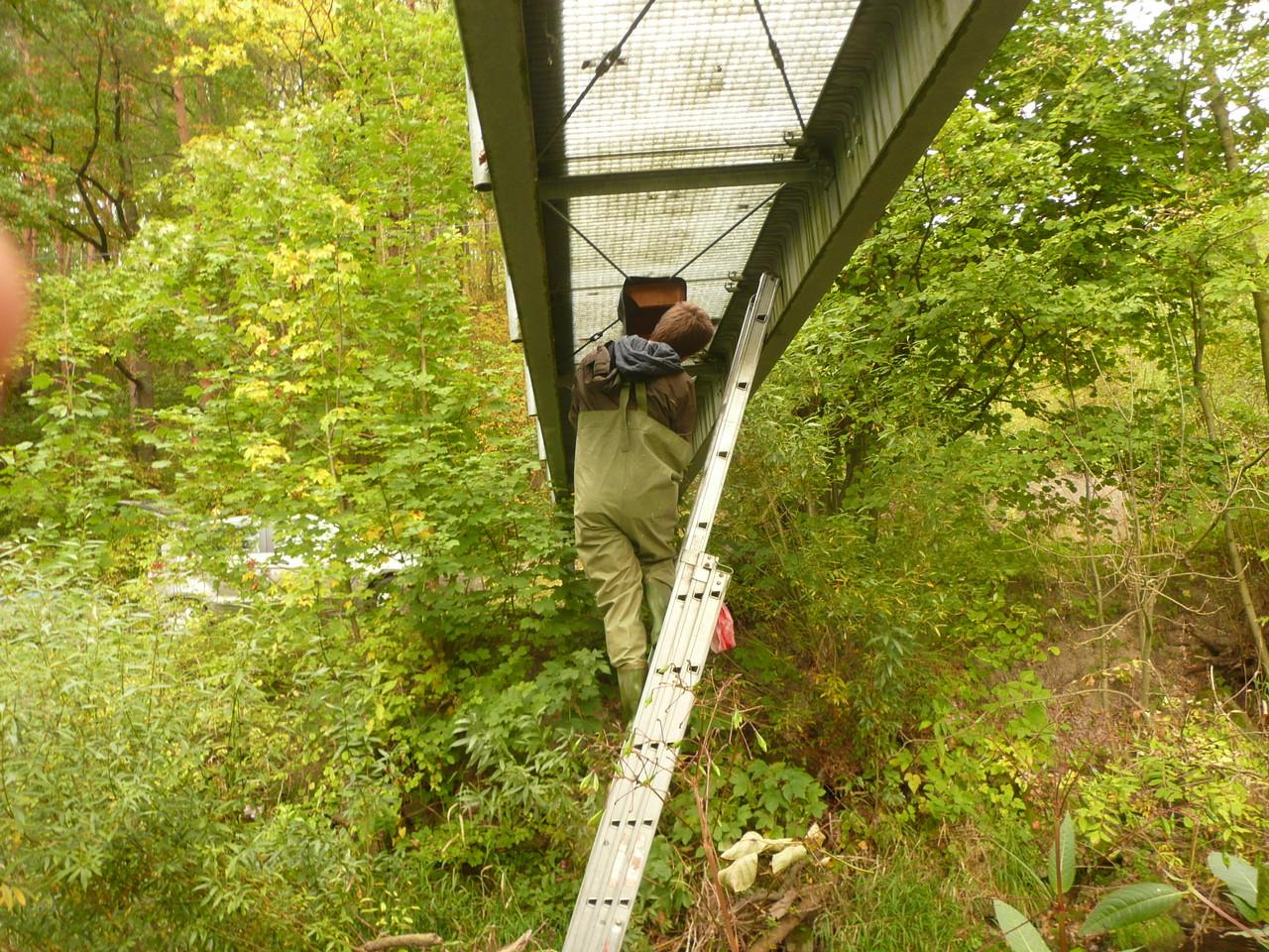 Auch im Bereich Niesen wurden unter Brücken Nistkästen für Wasseramsel und Gebirgsstelze montiert, hier eine Fußgängerbrücke / Foto: L. Singer