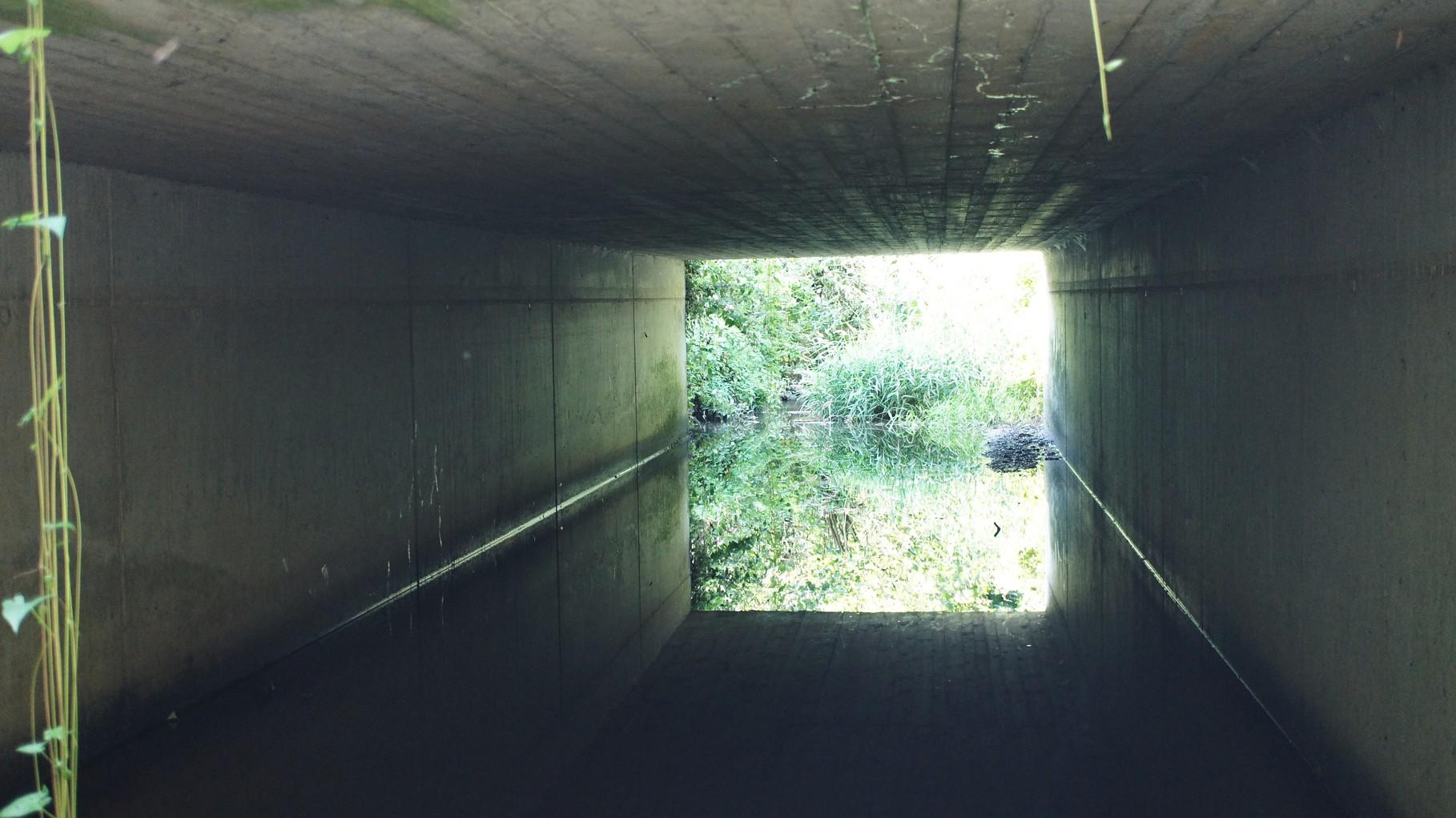 Betonbrücken hingegen bieten keinerlei Nistmöglichkeiten / Foto: D.Singer