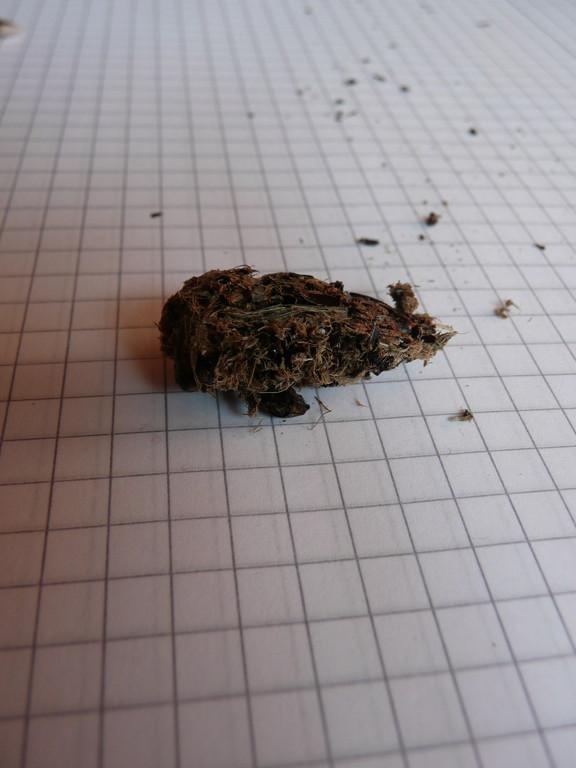 Steinkauzgewölle