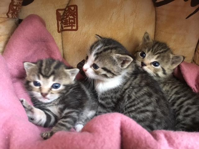Les 3 chatons de Charente