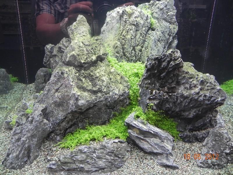 Aqua Scaping