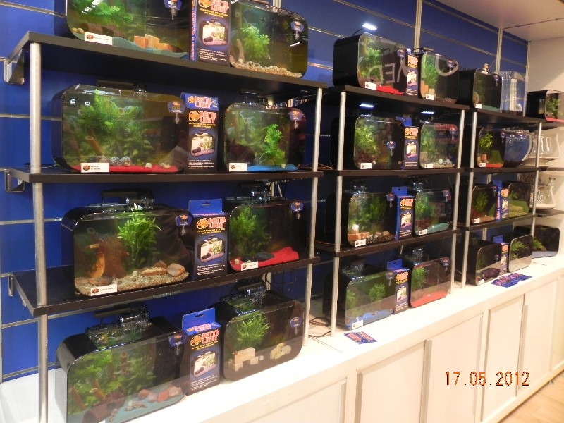 Betta Aquarien