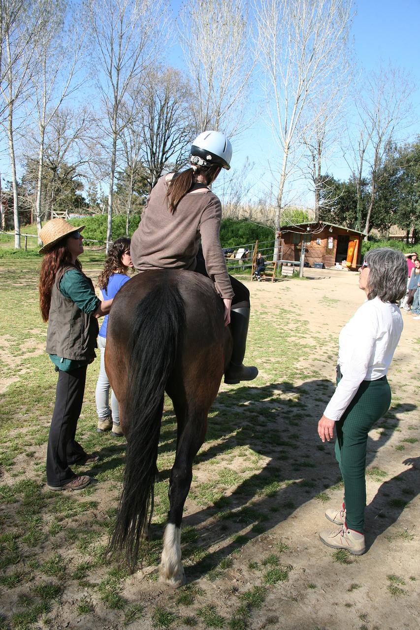 Introducción al conocimiento y manejo del caballo en Equinoterapia