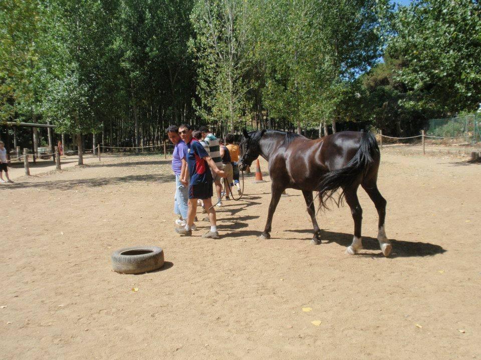 Taller Técnicas de Coaching Adaptadas a la Equinoterapia