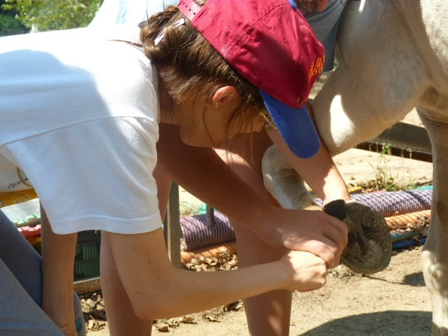 La higiene del caballo - Equinoterapia Exprés