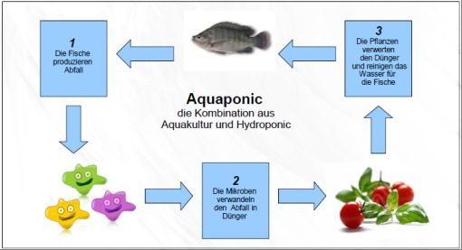 Nährstoffkreislauf in einer Aquaponic-Anlage