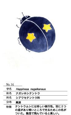 ナガレボシテントウ