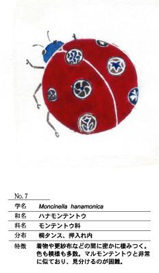 ハナモンテントウ