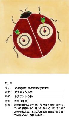 ヤナカテントウ
