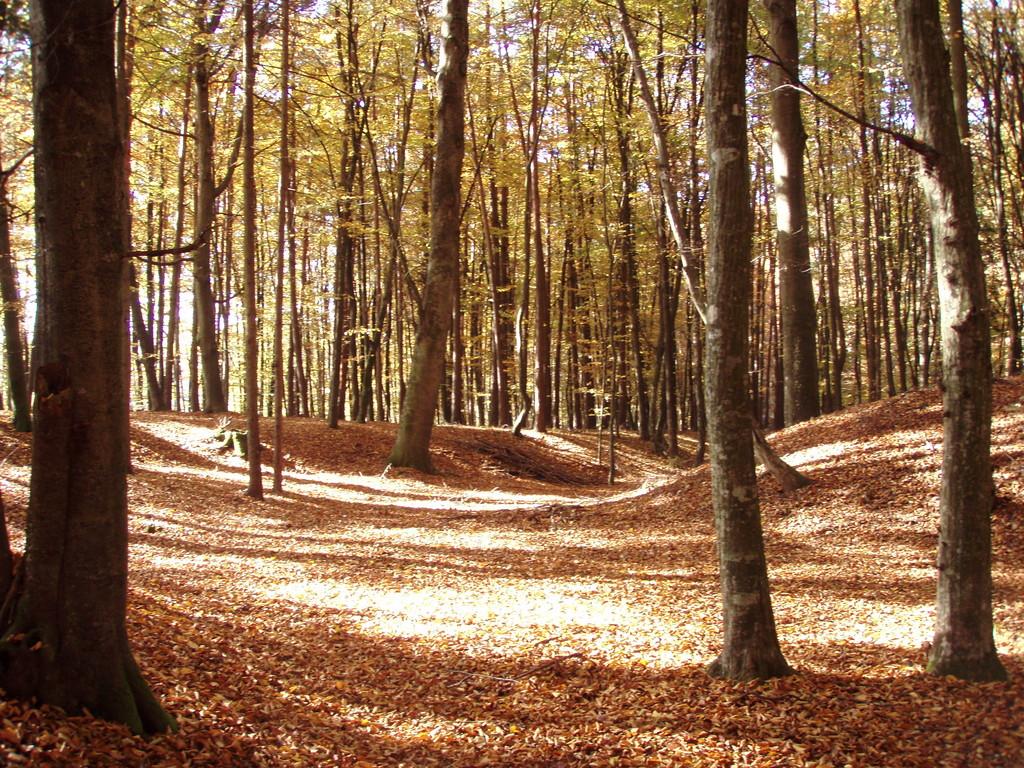 zeigt die Sonne im Wald,