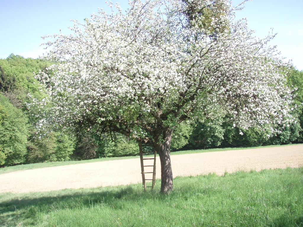 unseren Frühling,