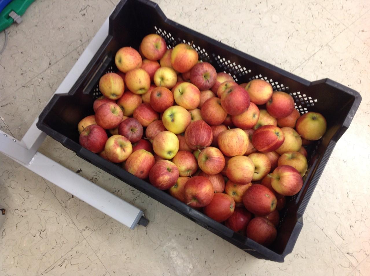 Die Äpfel werden vom Apfelhof Gatterbauer geliefert...