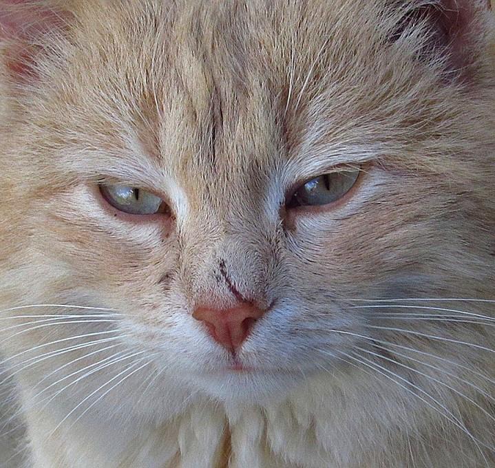 Energetische Narbenentstörung bei Mensch und Tier