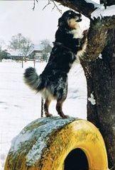 da muß doch was auf dem Baum liegen, ich riech es doch!