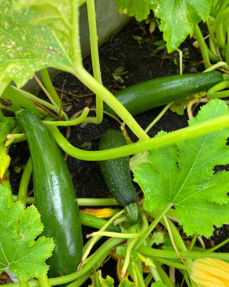 Pflanzen wachsen – Kinder auch