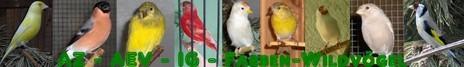 AZ - AEV -IG Farben - Wildvögel