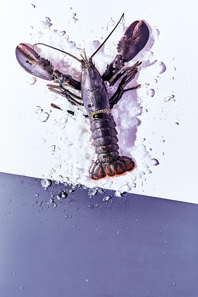 Hummer ungekocht auf Eis
