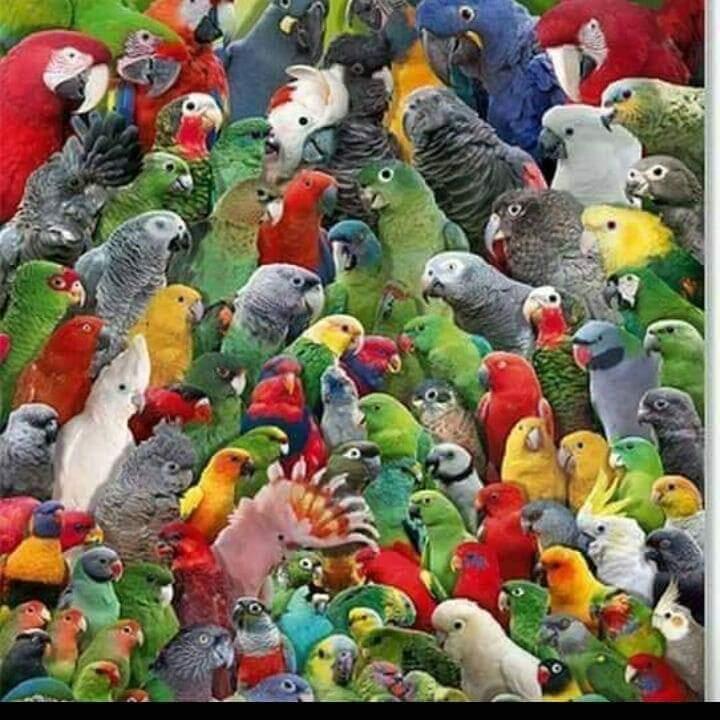 Jual Burung Nuri Dari Berbagai Jenis Dan Usia Parrot Store