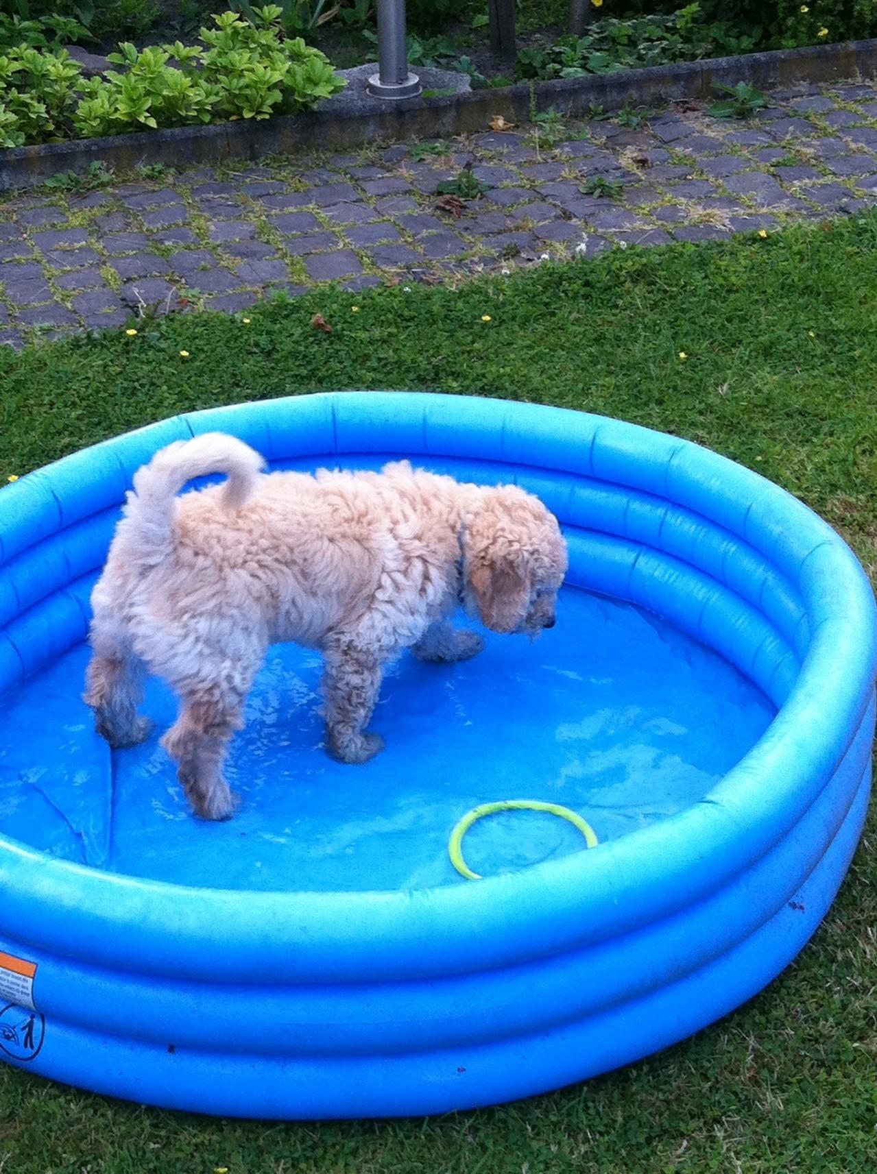 mein eigener Swimmingpool