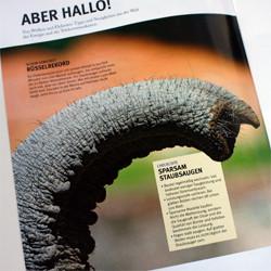 EWE HalloNachbar Kundenmagazine