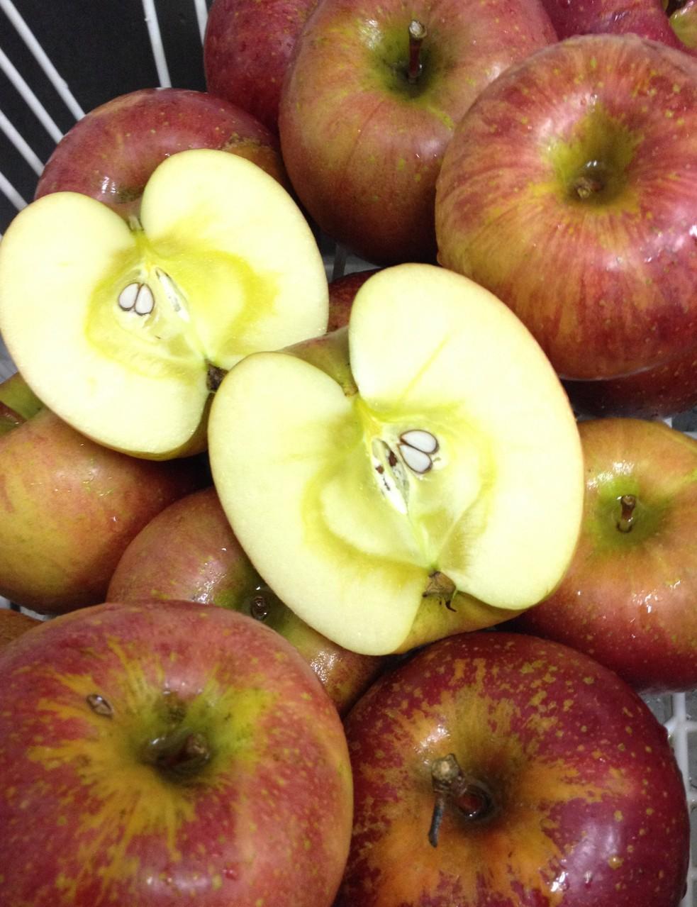 1月:芸北産ふじりんご