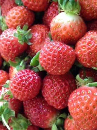 2月:豊平産いちごレッドパール
