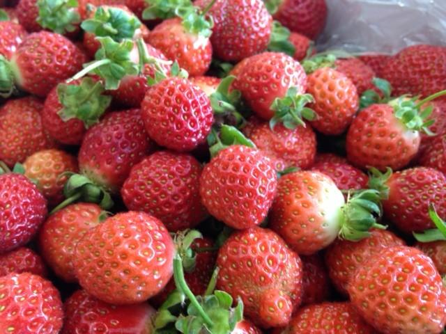 3月:苺の収穫始まる♪