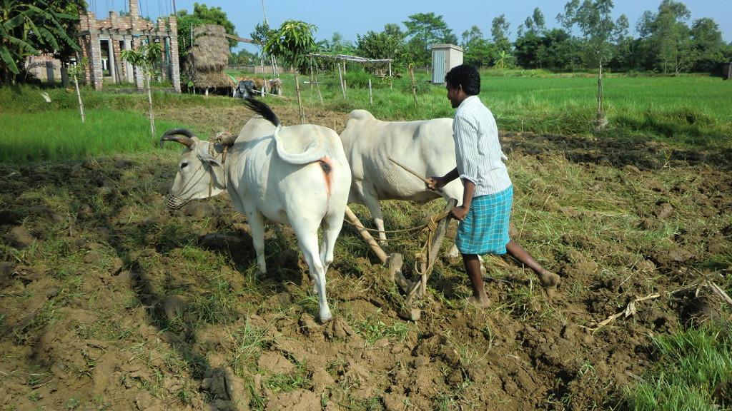 Landwirtschaft zur Selbstversorgung