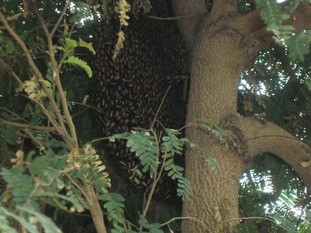 Bienennest auf der Norbert Mission