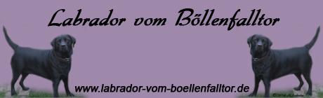 Homepage Banner Größe 460 x 140 Pixel ( Breite 16,23 cm x Höhe 4,94 cm )