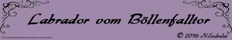 Homepage Banner Größe 460 x 80 Pixel ( Breite 16,23 cm x Höhe 2,82 cm )