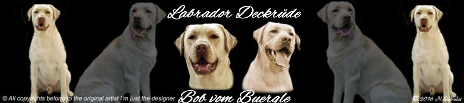 Homepage Banner Größe 940 x 210 Pixel ( Breite 33,16 cm x Höhe 7,41 cm )