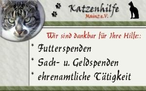 Tierbetreuung Lorenz Noll unterstützt die Katzenhilfe Mainz