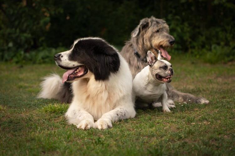 Angus, Amarouk und Sir Henry