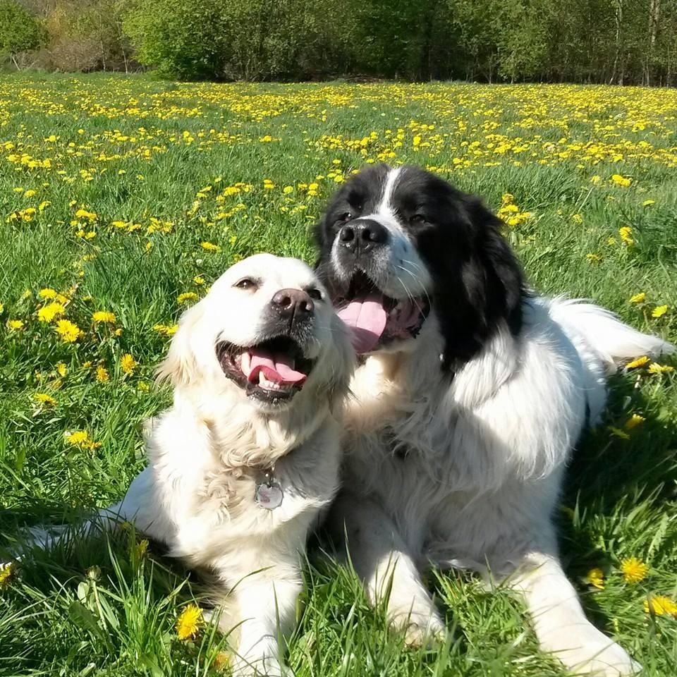 Brody und seine Freundin Luna