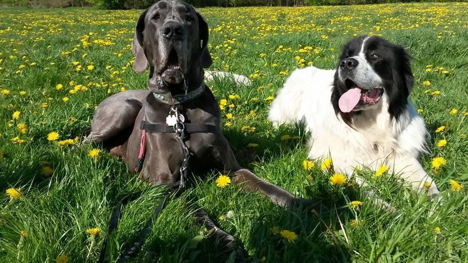 Rufus und Brody