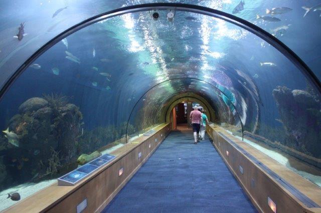 Unterwasser Museum Valencia